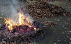 leaf burning