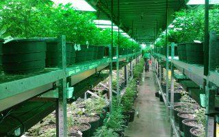 Grow Room Odor Control