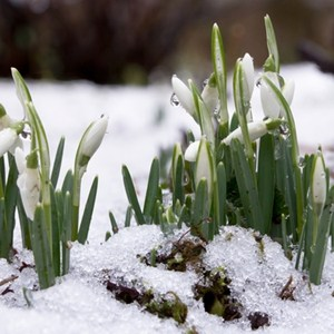 Melting Snow Can Trigger Snow Mold Allergies